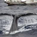 whale_09