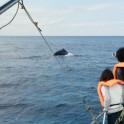 whale_13
