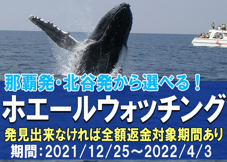 沖縄ホエールウォッチングツアー