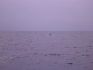 whale2015012103