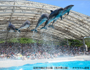 Dolphin Show at [Okichan Theater]