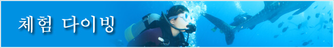플랜 카테고리  체험 다이빙