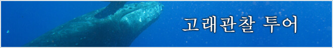 플랜 카테고리 고래관찰 투어