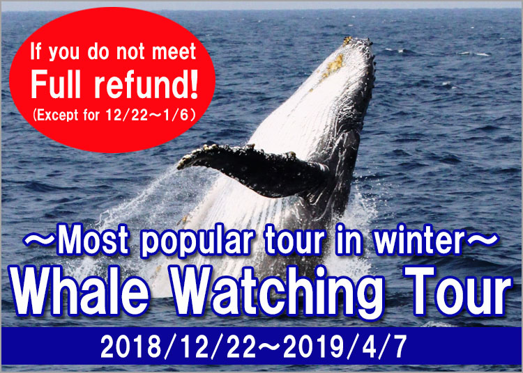 Powerful whale watching in Okinawa
