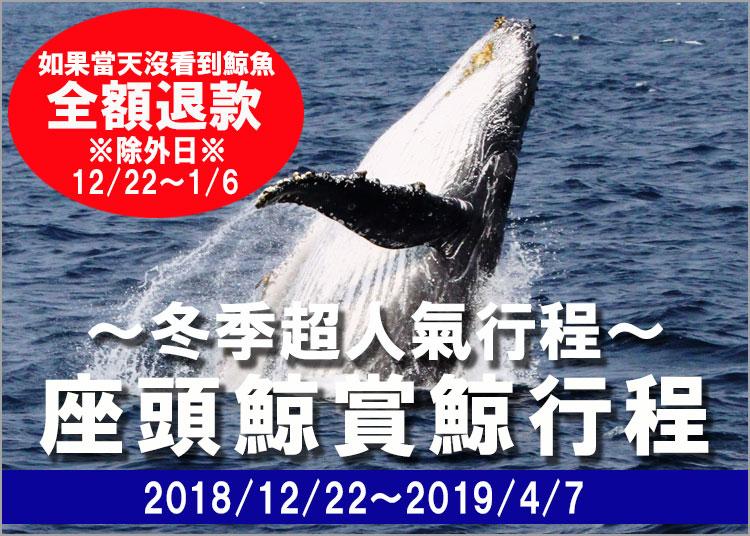 强大的观鲸在冲绳
