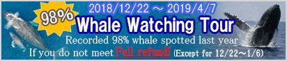 Powerful whale watching in Okinawa