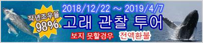 오키나와에서 박력의 고래