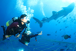 "The ""Scuba Diving"" image"