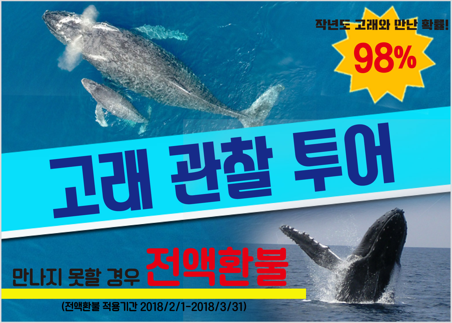 :enPowerful whale watching in Okinawa! 2017-2018 during the reception::zh强大的观鲸在冲绳!期间接待2017-2018::ko오키나와에서 박력의 고래! 2017 ~ 2018 접수 중: