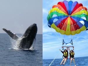 whale&para