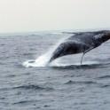 whale 20110210_010