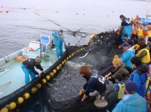 定置網漁①