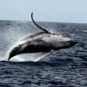 鯨ジャンプ1