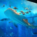 沖縄美ら海水族館 s