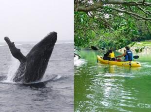 whale-kayak