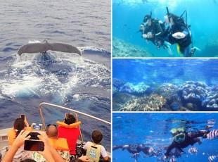 whale-umisora