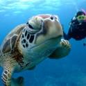 P Diving (2)