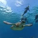 P Snorkeling (6)