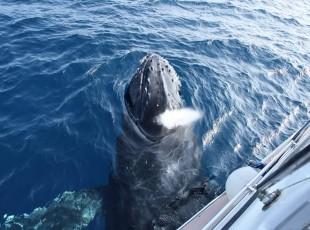 P Whale (42)