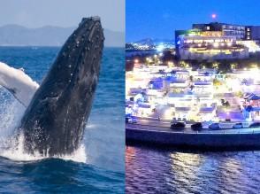 senagajima + whale watching