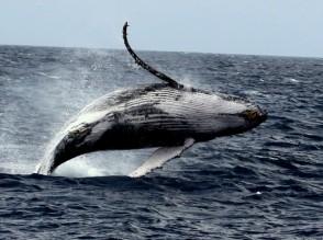 P Whale (61)