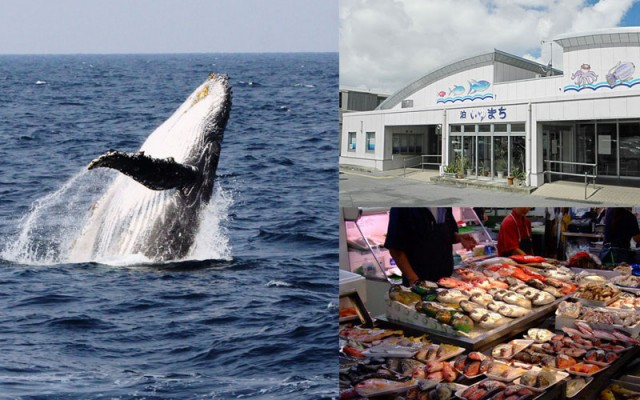 tomari-whale