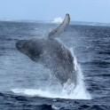 P Whale (31)