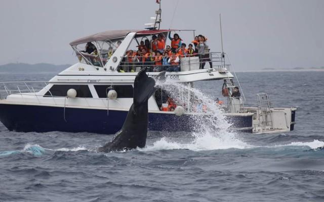 P Whale (32)