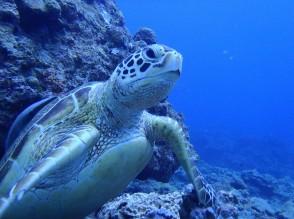 尋找野生海龜