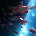 P Diving (4)