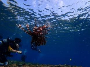 P Diving (5)