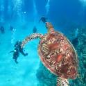 P Diving (1)