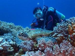 P Diving (3)