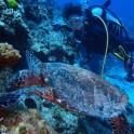 P Diving (6)
