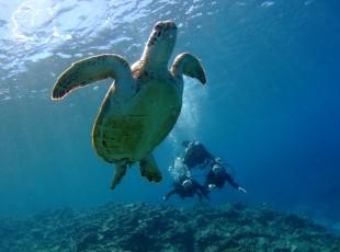 P Diving (7)