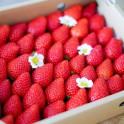 美らイチゴ4