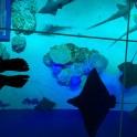 DMM水族館2