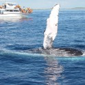 P-Whale-Ds-5-1024x768