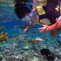 slider_snorkeling3