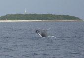 whale012501.jpgのサムネール画像