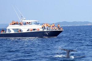 whale_12.jpg