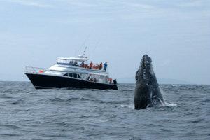 whale_15.jpg