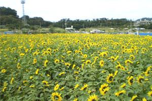 blog-20120204sakura2.jpg