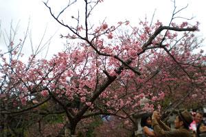 blog-20120204sakura4.jpg