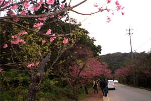 blog-20120204sakura6.jpg