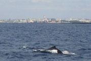 whale012502.jpg