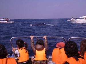 whale111111.jpg