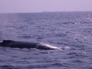 whale222222.jpg
